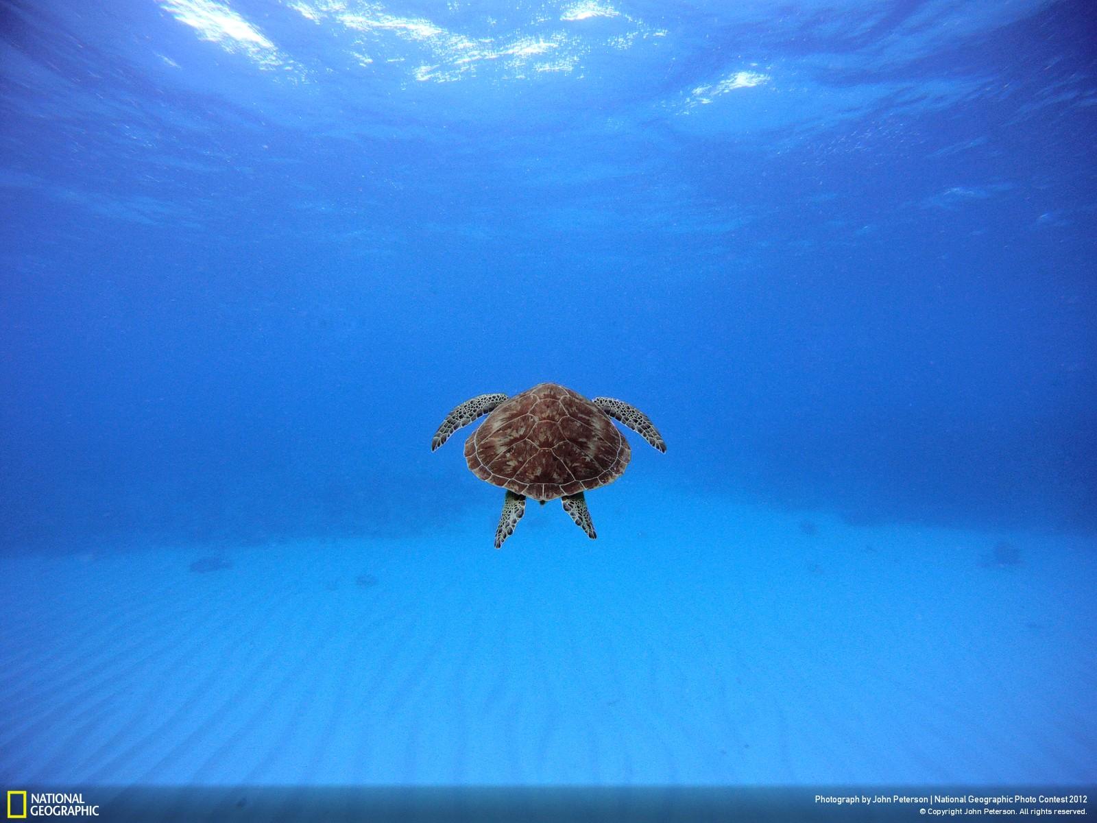 23 Лучшие фотографии за 2012 год по версии National Geographic