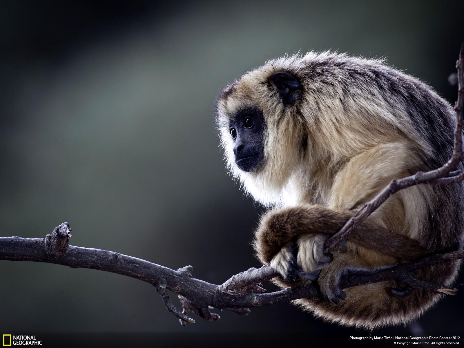 25 Лучшие фотографии за 2012 год по версии National Geographic