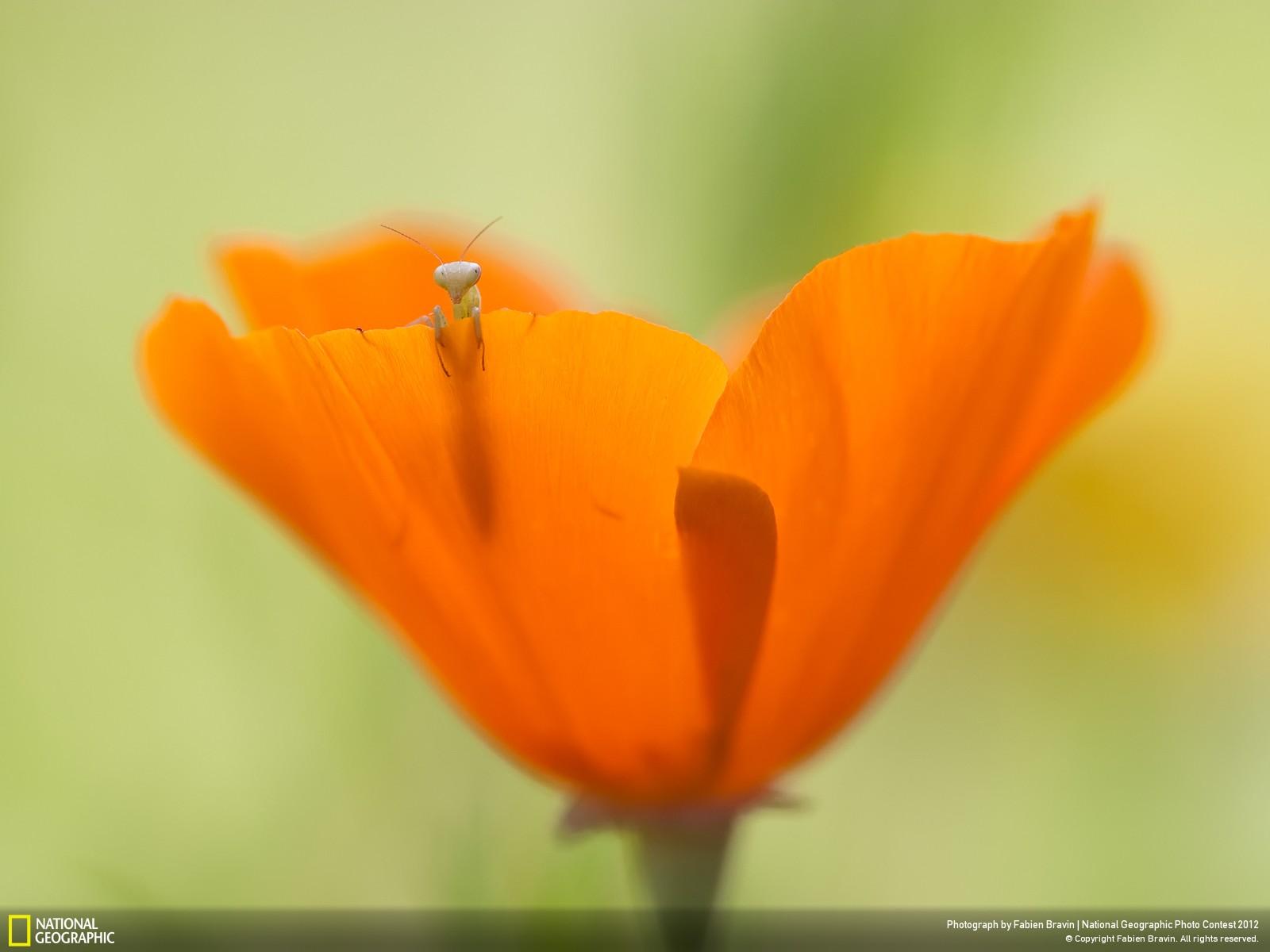 29 Лучшие фотографии за 2012 год по версии National Geographic