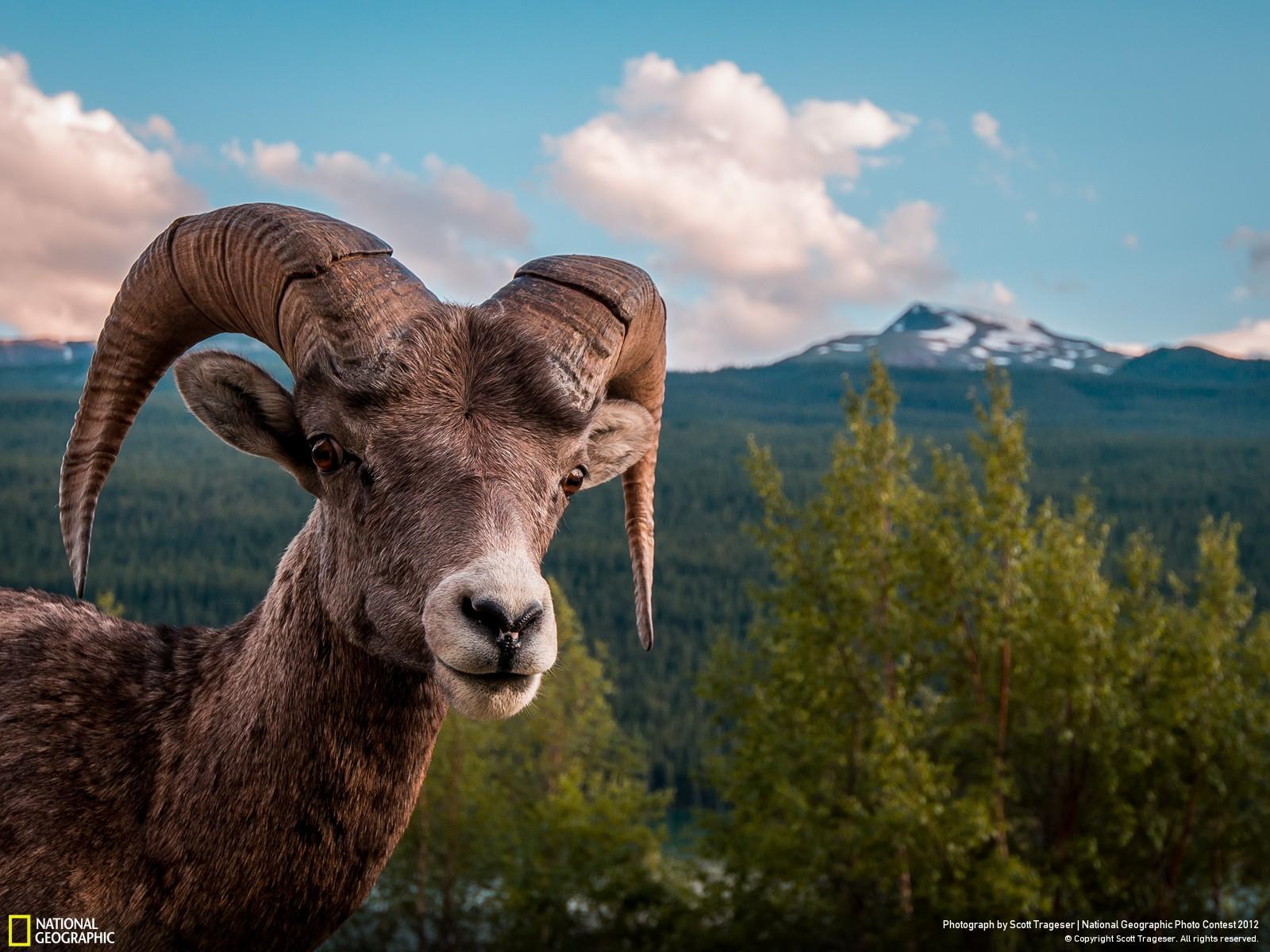 30 Лучшие фотографии за 2012 год по версии National Geographic