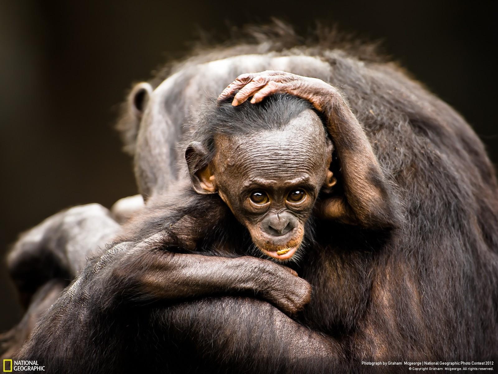 31 Лучшие фотографии за 2012 год по версии National Geographic