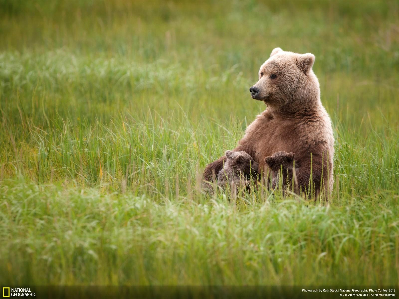 32 Лучшие фотографии за 2012 год по версии National Geographic