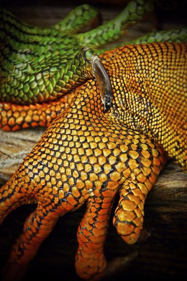 33 Лучшие фотографии за 2012 год по версии National Geographic