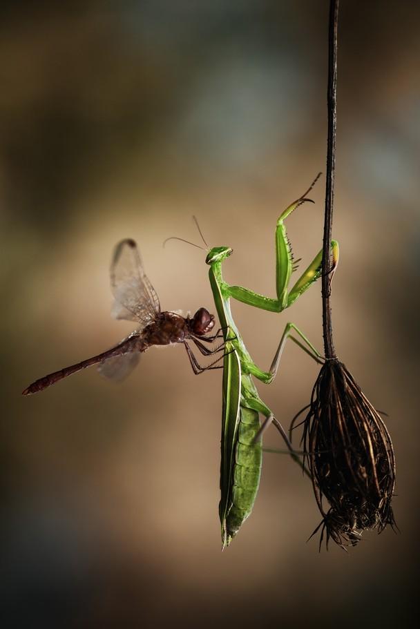 34 Лучшие фотографии за 2012 год по версии National Geographic