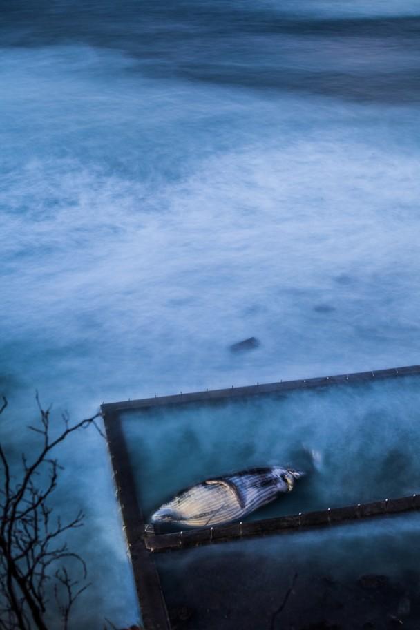 37 Лучшие фотографии за 2012 год по версии National Geographic