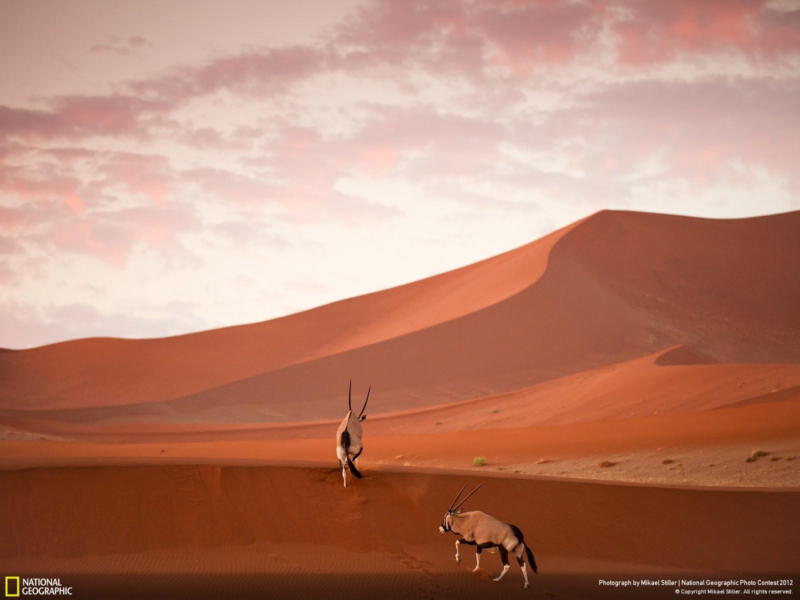 42 Лучшие фотографии за 2012 год по версии National Geographic
