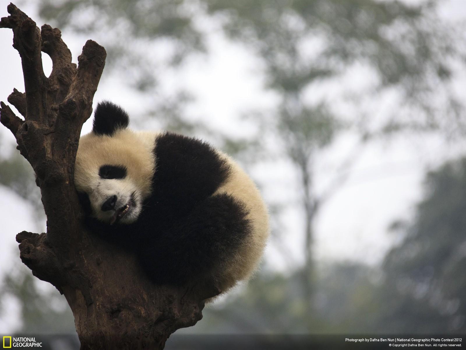 43 Лучшие фотографии за 2012 год по версии National Geographic