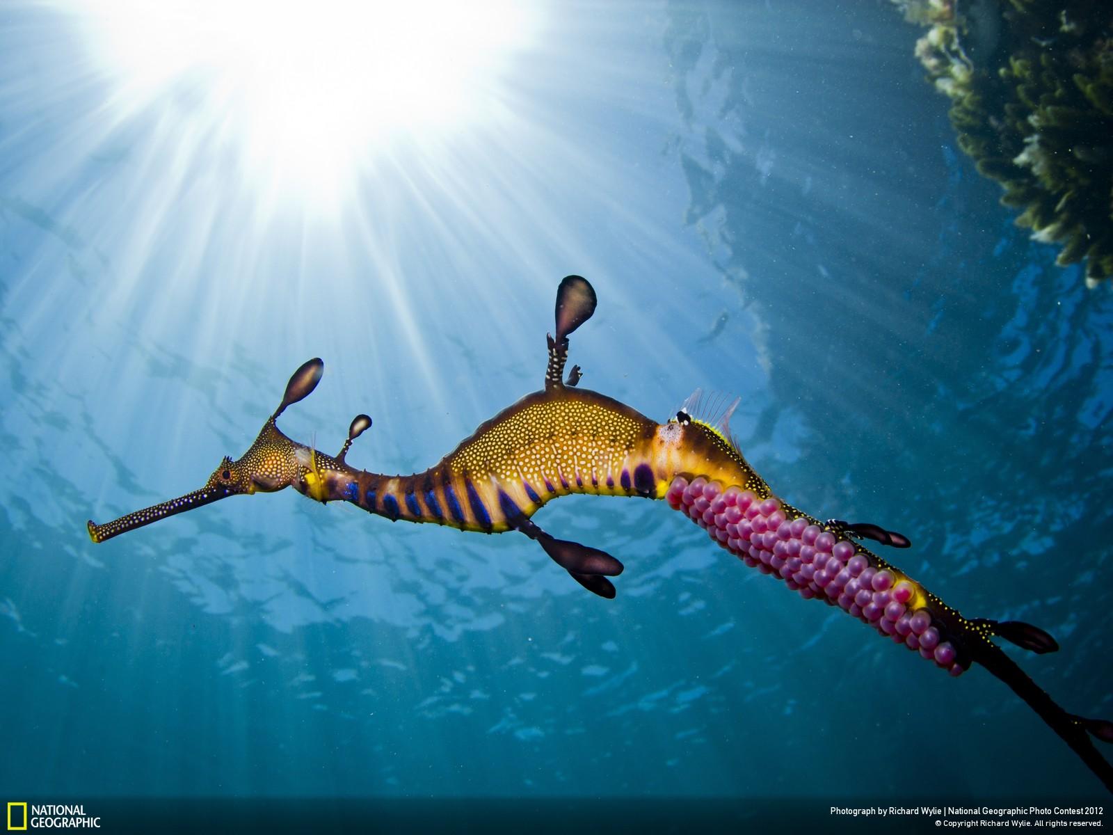 44 Лучшие фотографии за 2012 год по версии National Geographic