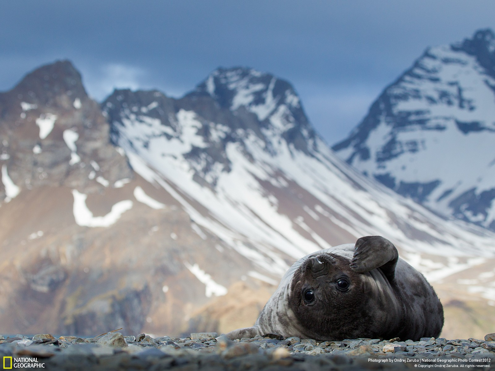 45 Лучшие фотографии за 2012 год по версии National Geographic