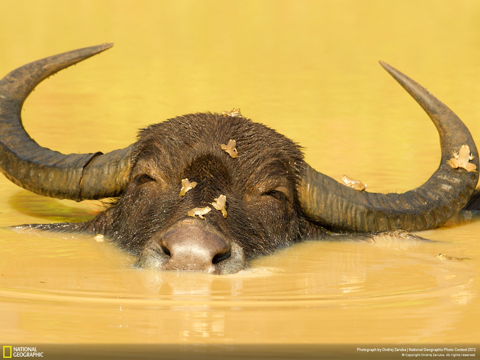 46 Лучшие фотографии за 2012 год по версии National Geographic