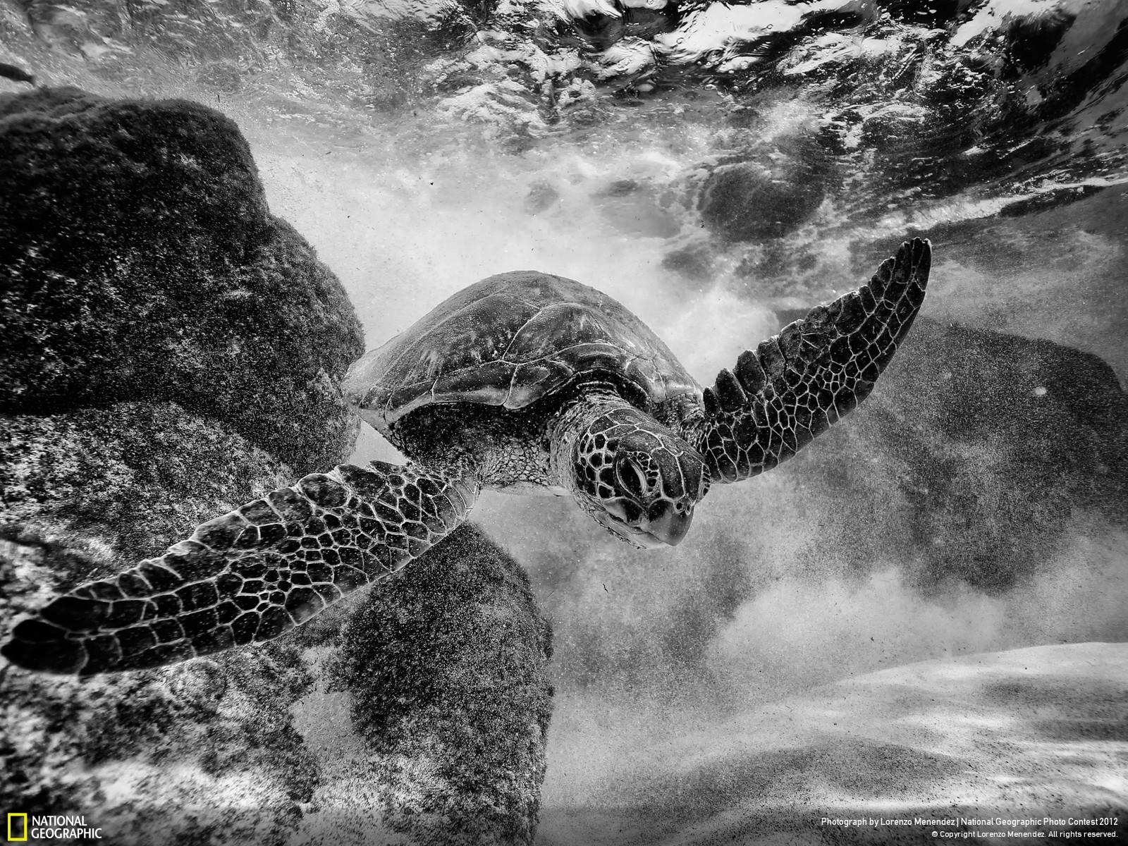49 Лучшие фотографии за 2012 год по версии National Geographic