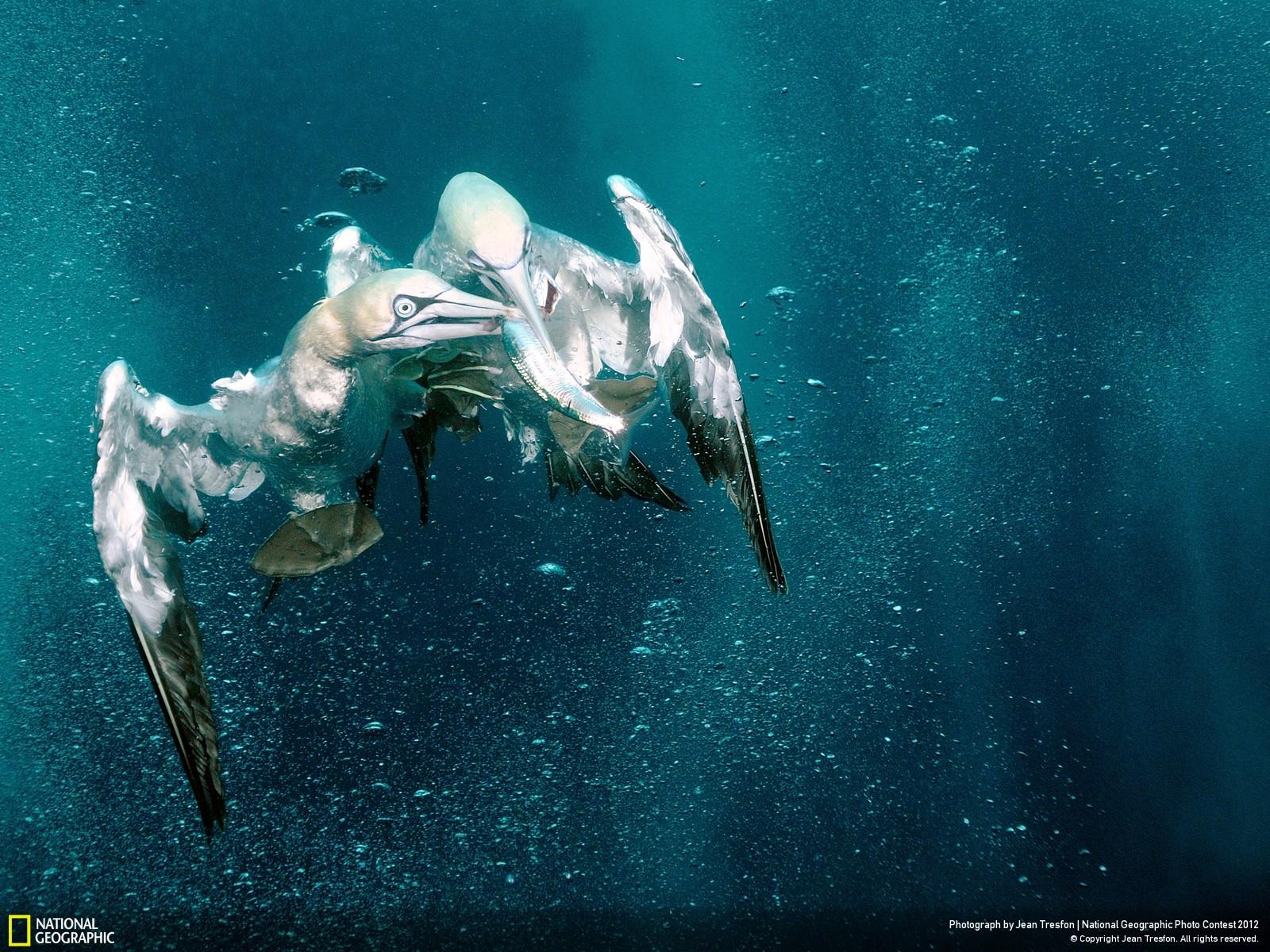 50 Лучшие фотографии за 2012 год по версии National Geographic