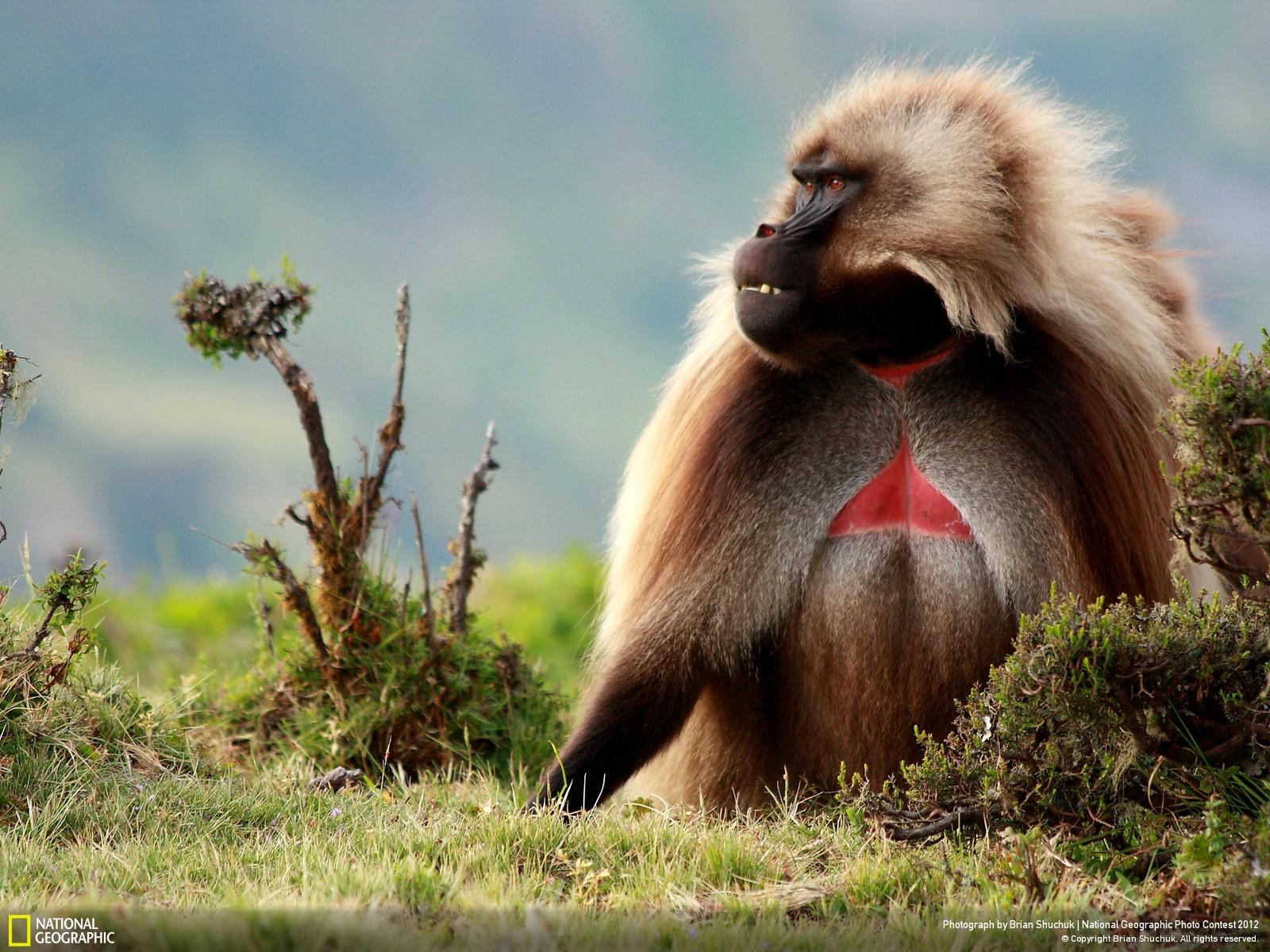 51 Лучшие фотографии за 2012 год по версии National Geographic