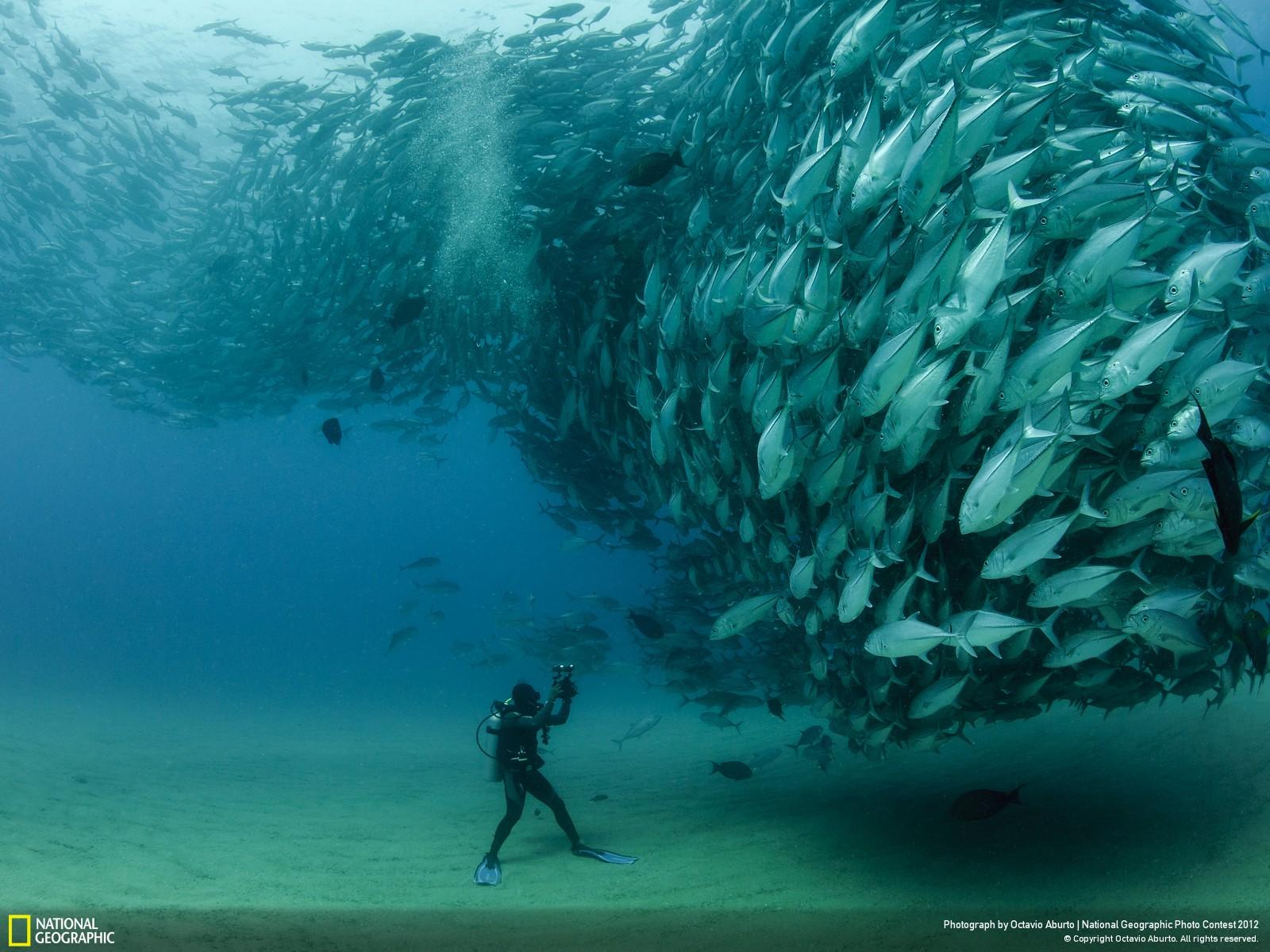 52 Лучшие фотографии за 2012 год по версии National Geographic