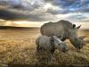 thumbs 17 Лучшие фотографии за 2012 год по версии National Geographic