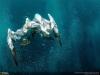 thumbs 50 Лучшие фотографии за 2012 год по версии National Geographic