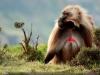thumbs 51 Лучшие фотографии за 2012 год по версии National Geographic