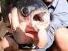 thumbs horrible 14 5 Самые жуткие обитатели морских глубин