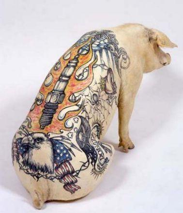 tattoos on pigs04 Татуированные свинки или странное искусство от Вима Делво