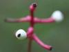 thumbs plant doll eye 3 Топ 12. Самые жуткие растения планеты Земля