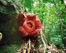 thumbs 1 Топ 12. Самые жуткие растения планеты Земля