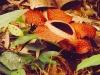 thumbs 3 Топ 12. Самые жуткие растения планеты Земля