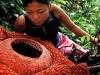 thumbs ra Топ 12. Самые жуткие растения планеты Земля