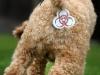 thumbs rear gear butt covers for pets 3 Попакрывашки для домашних животных