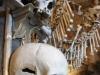 thumbs cddg Самое зловещее место в Чехии   костехранилище в Седлеце