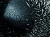 thumbs tehom 6 Потрясающие воображение мозаики Анджело Муско, состоящие из тысяч обнаженных тел