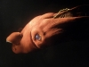 thumbs horrible 10 Самые жуткие обитатели морских глубин