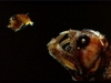 thumbs horrible 2 Самые жуткие обитатели морских глубин