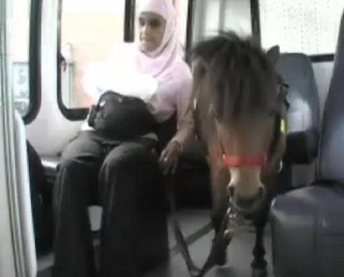 horse Пони поводырь