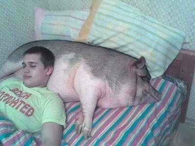 farmpilow Свиная подушка