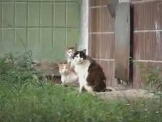 badass rat Наглая крыса совершенно не боится кошек