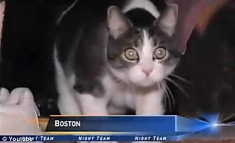 Sal 1 Американское правосудие: одним из членов суда присяжных станет кот