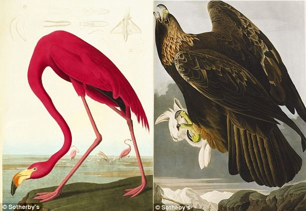 john james audubon 1 Самая дорогая в мире книга была продана за 11.4 млн. долларов