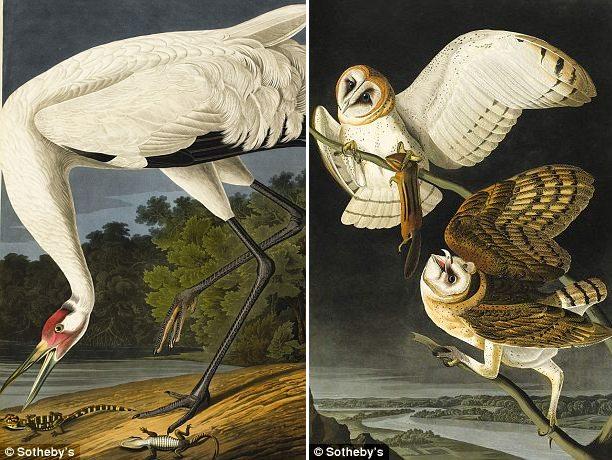 john james audubon 3 Самая дорогая в мире книга была продана за 11.4 млн. долларов