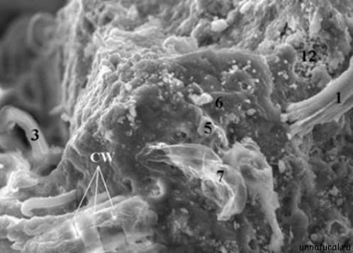 alien life Астробиолог НАСА обнаружил в метеорите инопланетную форму жизни