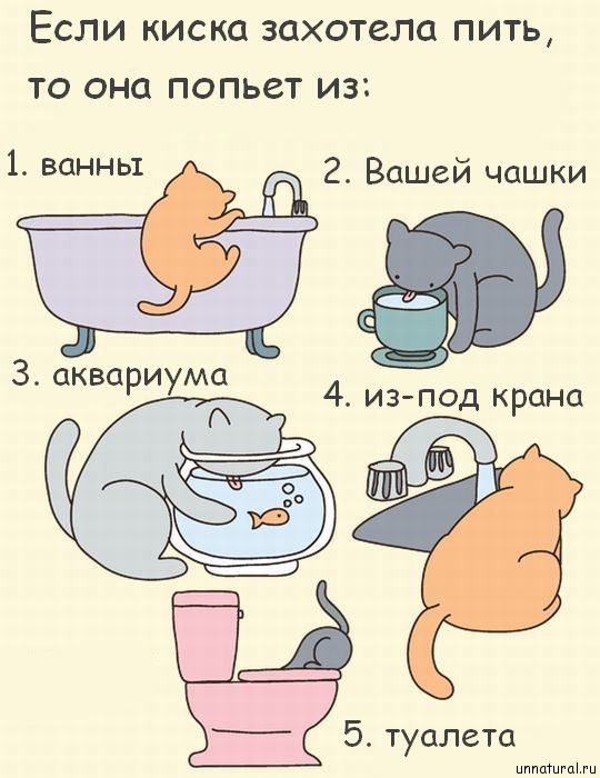 hilarious comics with 640 high 25 Кошкокомиксы