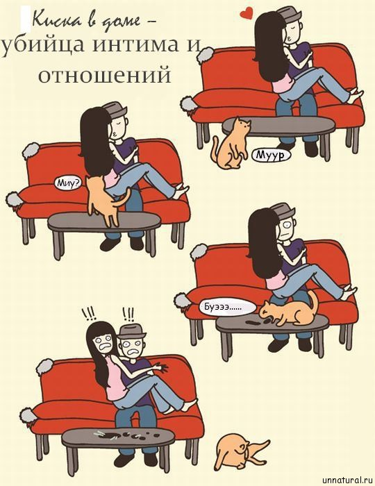 hilarious comics with 640 high 26 Кошкокомиксы