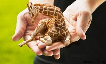 Lap Giraffes 2 Карманные жирафики
