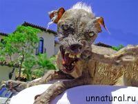 Sam Самые уродливые собаки в мире