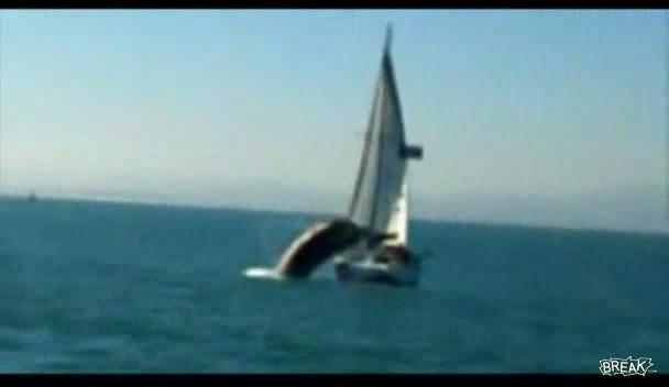 crazy whale Кит напал на яхту