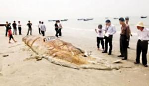 China Cthulhu 1 300x173 К берегу одного из китайских городов прибило бездыханное тело морского чудовища