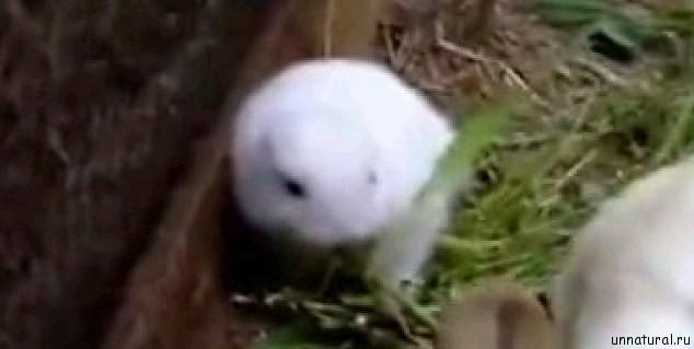 nuclear rabbit 4 Ядерный кролик. Поврежденный реактор электростанции Фукусима дай ити породил на свет мутанта?