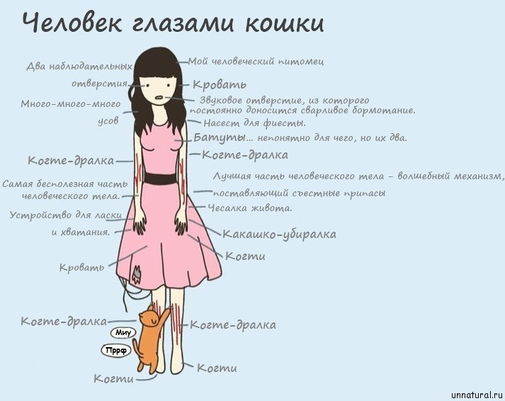 http://unnatural.ru/wp-content/uploads/2011/08/how-cats-see-humans.jpg