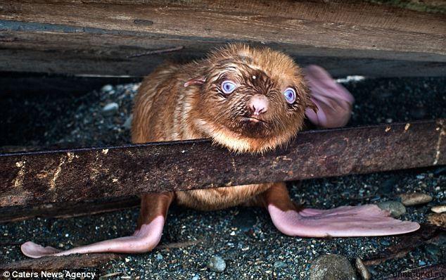 http://unnatural.ru/wp-content/uploads/2011/09/ginger_pop_2.jpg