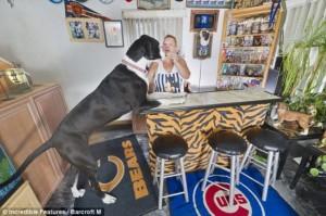 nova tallest female dog 3 300x199 Самая высокая самка собаки в мире