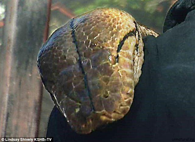 http://unnatural.ru/wp-content/uploads/2011/09/python_medusa_2.jpg
